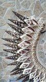 Schelpenketting ibiza brown_