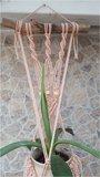 Plantenhanger boho zalm rose_
