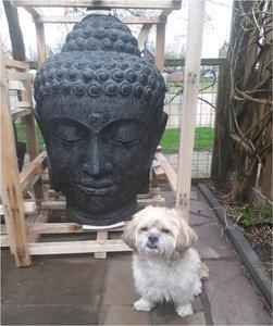 Budha hoofd XXL